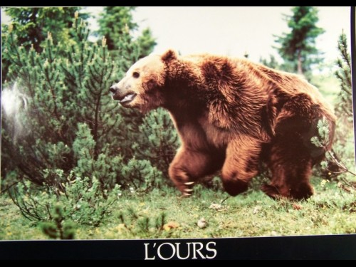 OURS (L') - THE BEAR