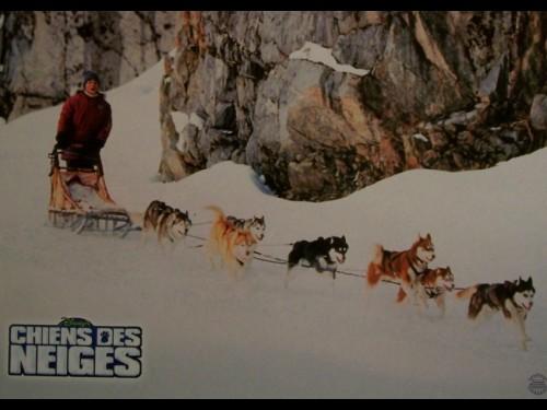 CHIENS DES NEIGES - SNOW DOGS