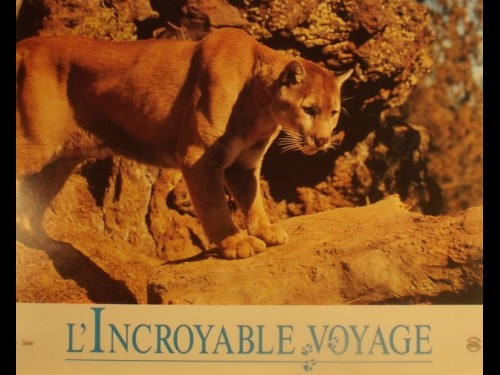 INCROYABLE VOYAGE (L')